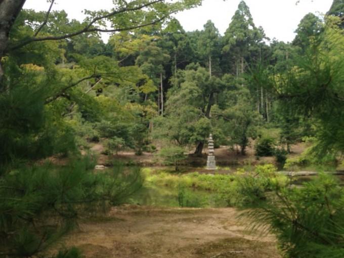 森林の中にある石